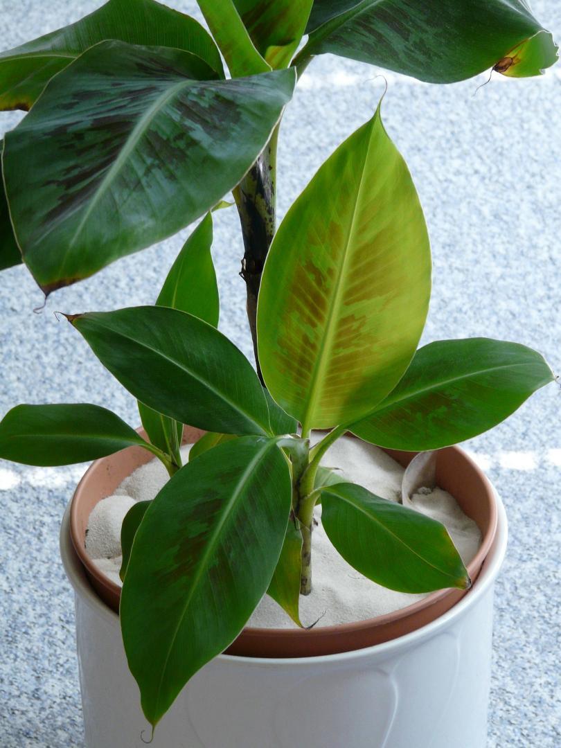 Giftige Zimmerpflanzen können eine gefährliche Deko darstellen.