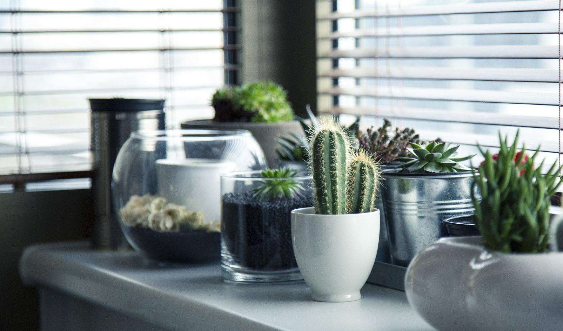 Welche ungiftigen Zimmerpflanzen verschönern die Wohnung?