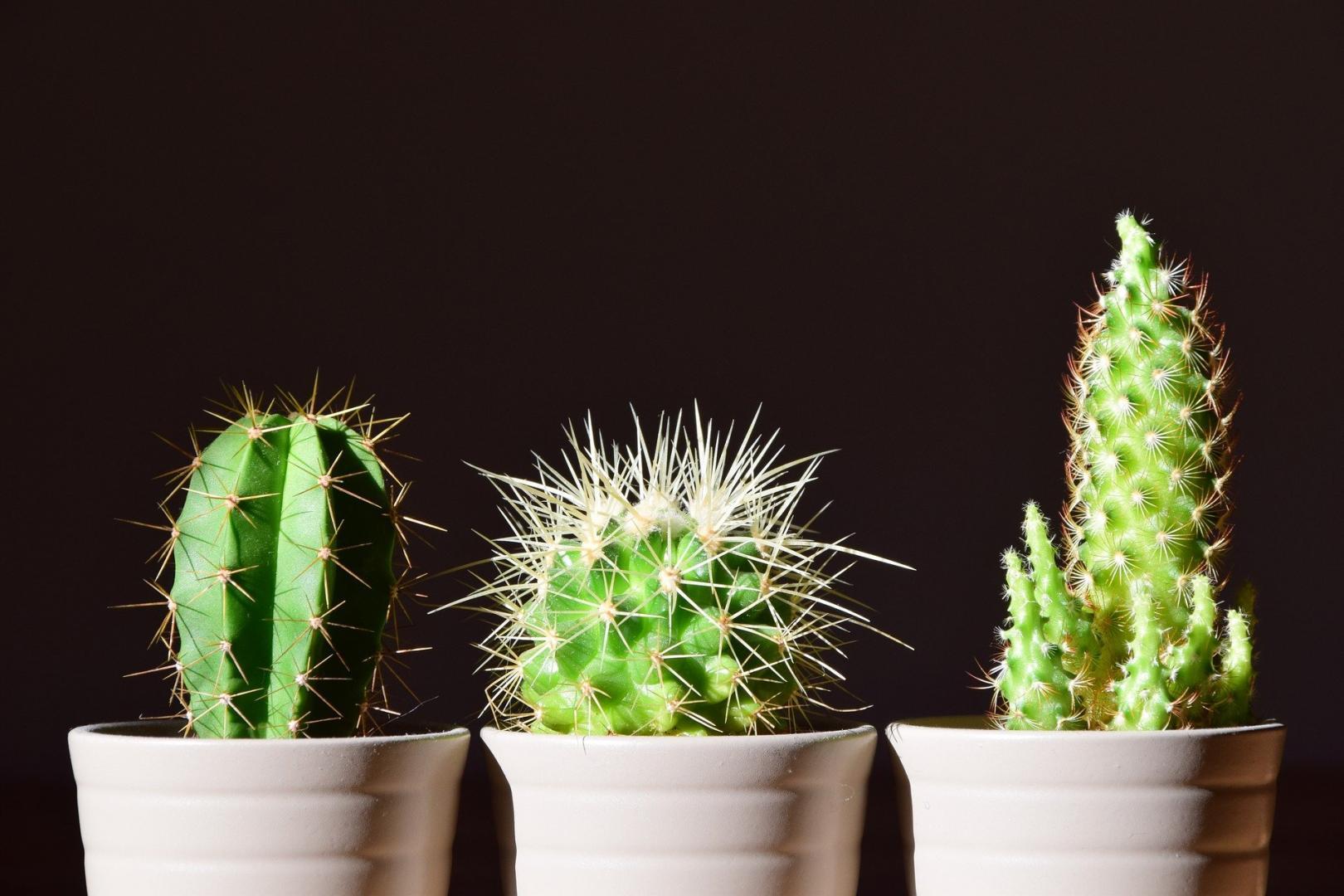 Warum sollten giftige Pflanzen für Kinder und Tiere unzugänglich sein?