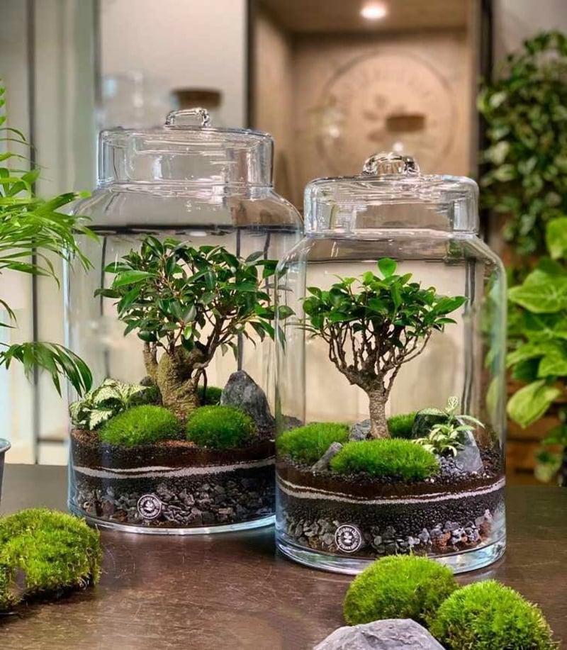 Bonsai Baum richtig pflegen