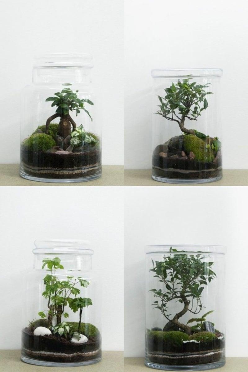 Bonsai Baum dekorativ