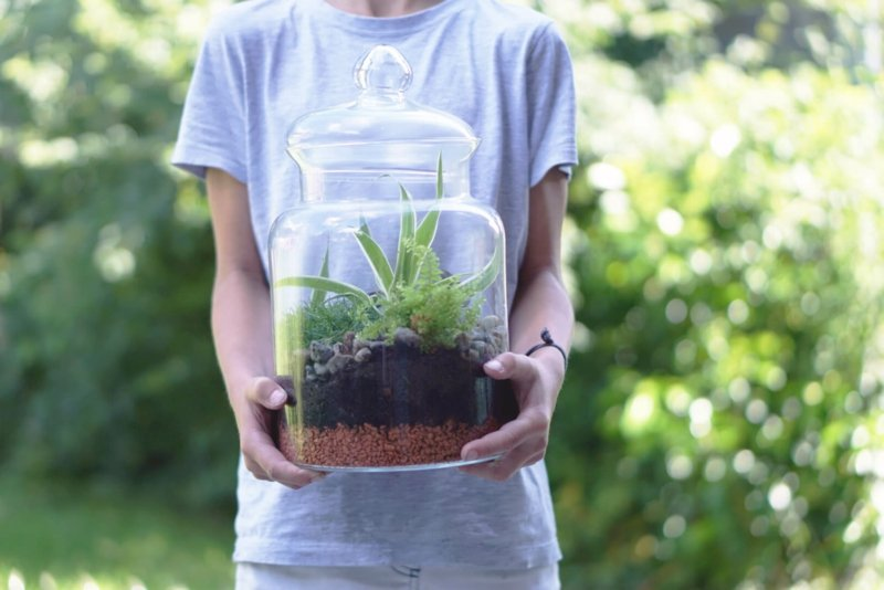 Pflanzen wählen Sukkulente Flaschengarten