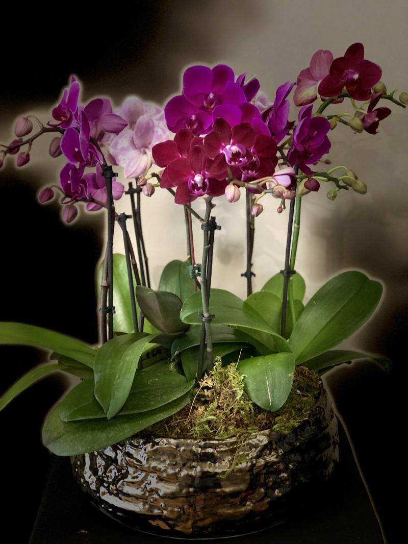 kleine Orchidee in Violett wunderschön