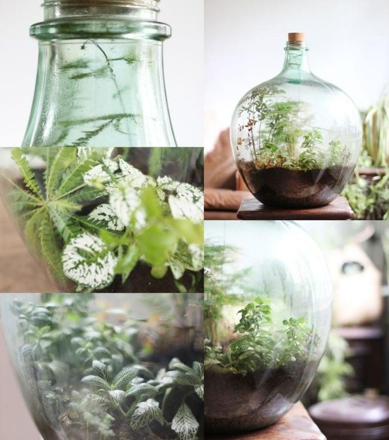 Flaschengarten anlegen welche Pflanzen