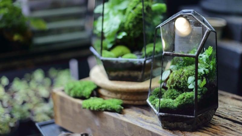 Pflanzen im Glas kleines Ökosystem