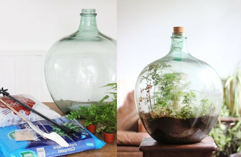 Pflanzen im Glas Pflegetipps