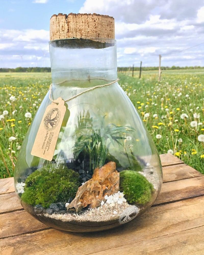 großes Gefäß Glas Korkendeckel Pflanzen