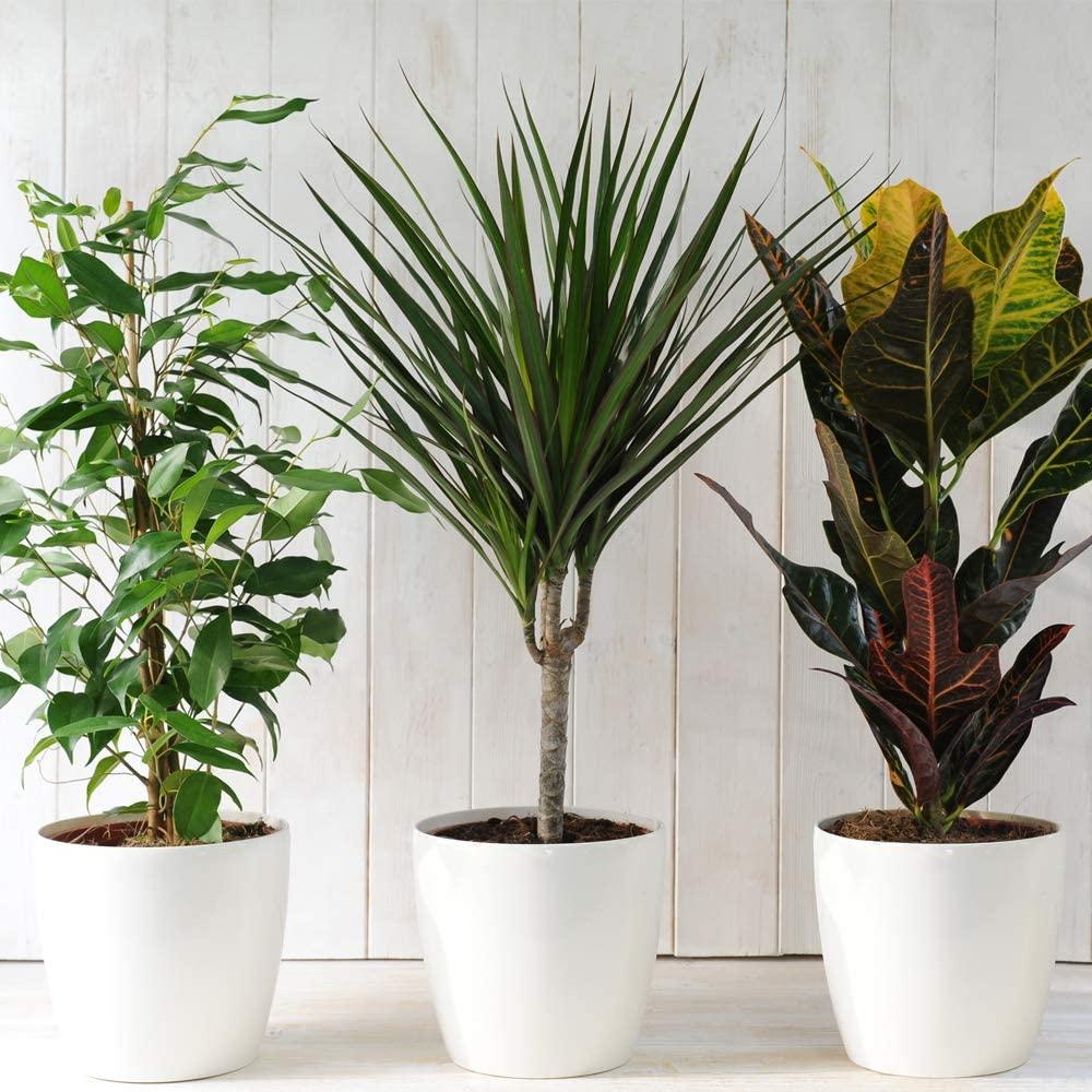 Immergrüne Zimmerpflanzen für Ihr Wohnzimmer