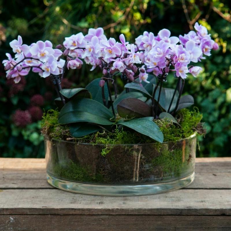 Mini Orchideen in Glasgefäß