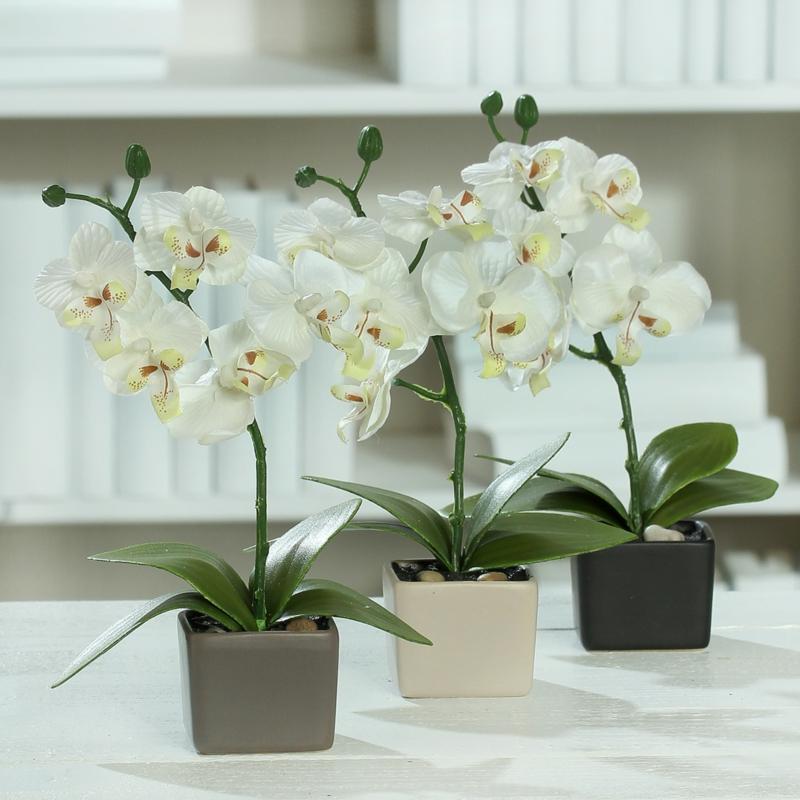 Orchideen pflegen Anleitung