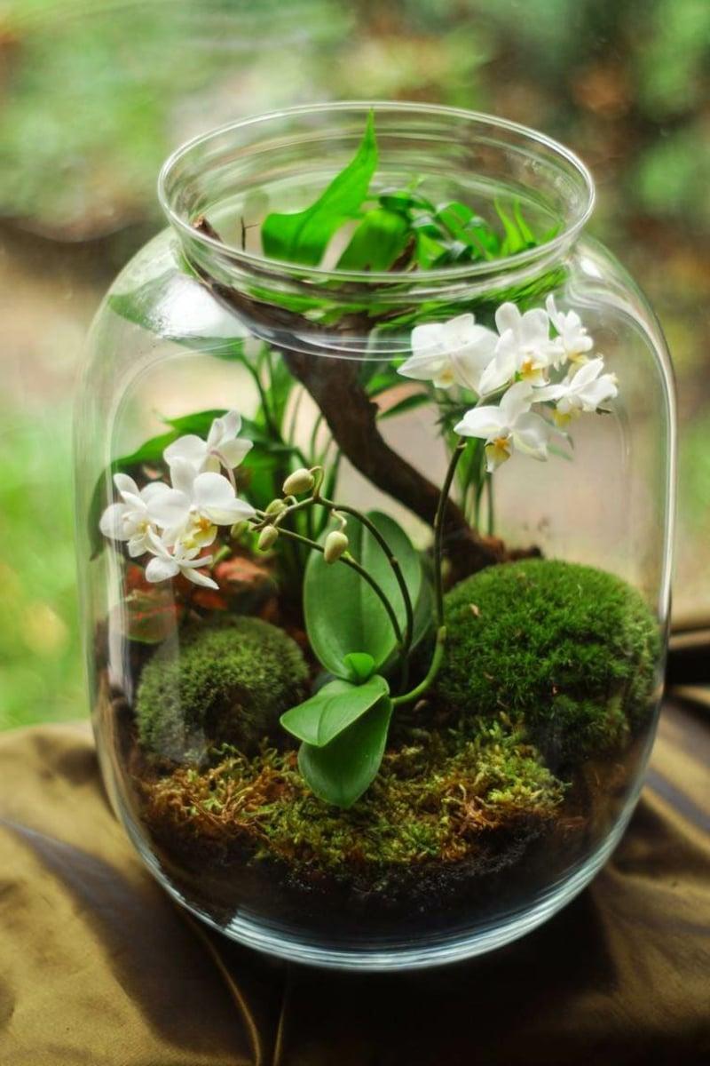 Orchidee pflegen Glas