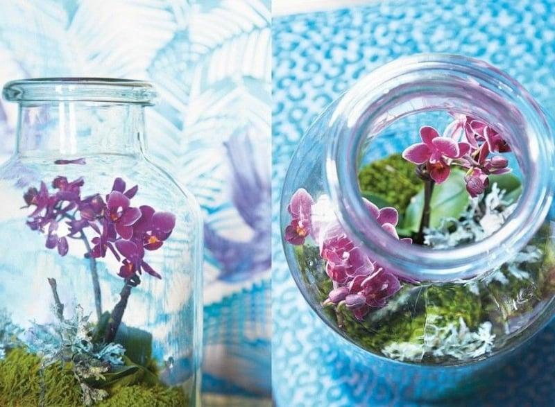 Flaschengarten mit Orchidee
