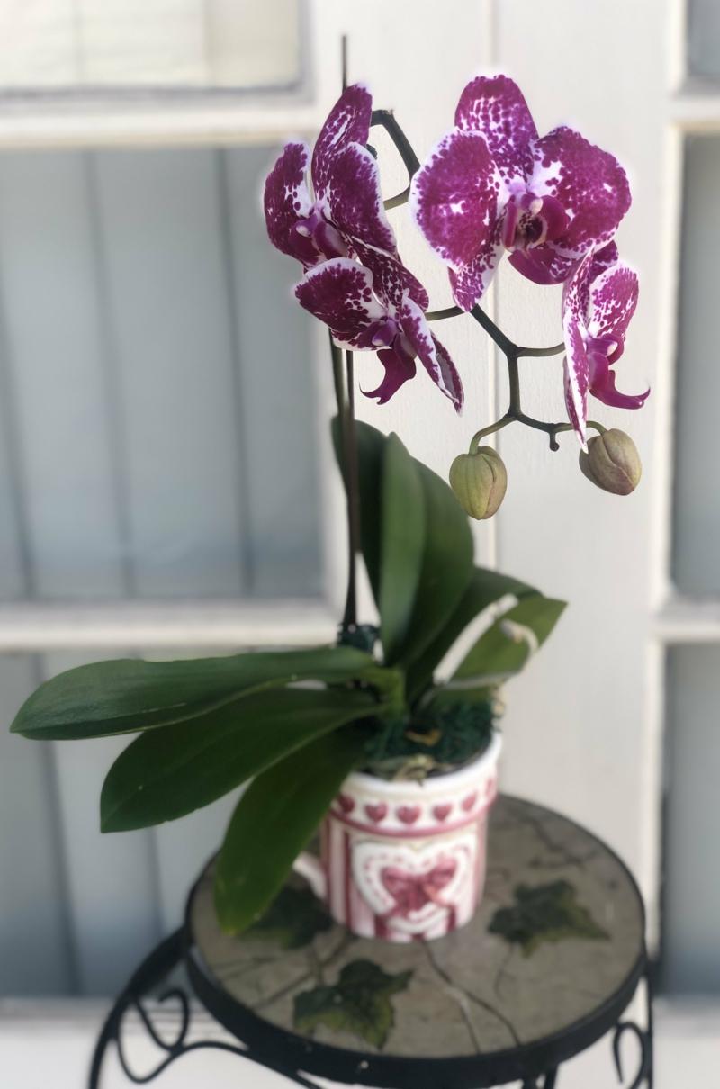 Orchidee violett wunderschön