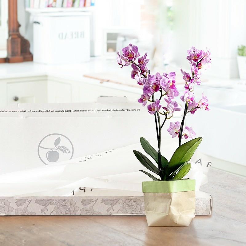 wunderschöne Zimmerpflanzen blühend