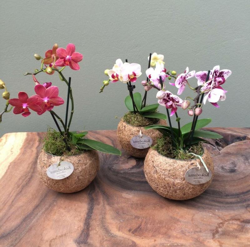 Orchideen pflegen wie geht es