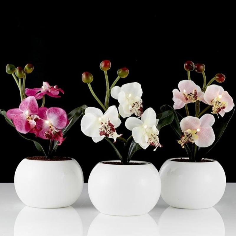 Mini Orchidee hilfreiche Pflegetipps