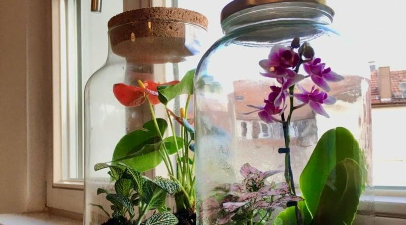 Mini Orchideen pflegen