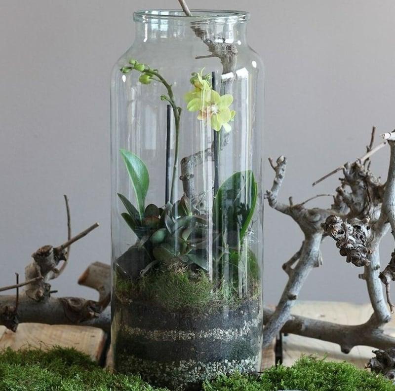 Mini Orchidee gelb Glasgefäß