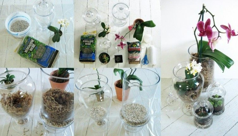 Mini Orchidee pflanzen Materialien