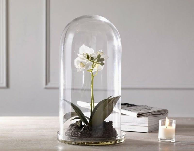 schöne Orchidee unter Glasglocke