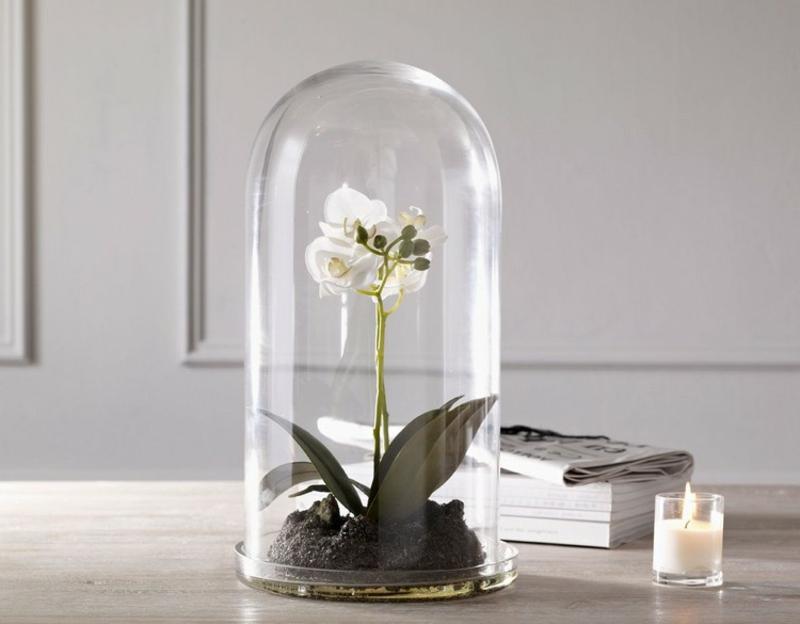 weiße Orchidee unter Glasglocke