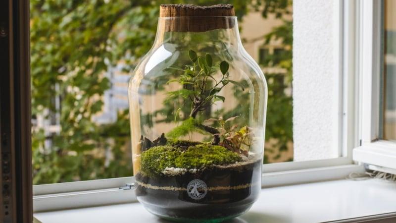 Flaschengarten anlegen Ideen und Anregungen