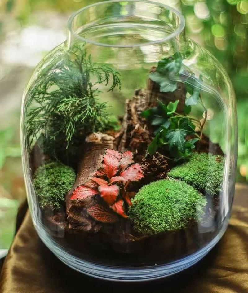 Pflanzen im Glas richtig pflegen Tipps