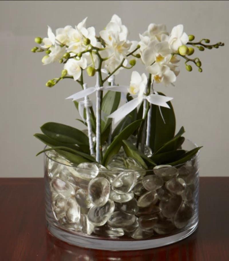 Zimmerpflanzen dekorativ