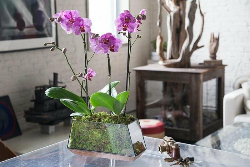 Zimmerpflanzen Ideen und Anregungen