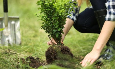 Baum pflanzen im eigenen Garten - Tipps für die Wahl der passenden Baumart