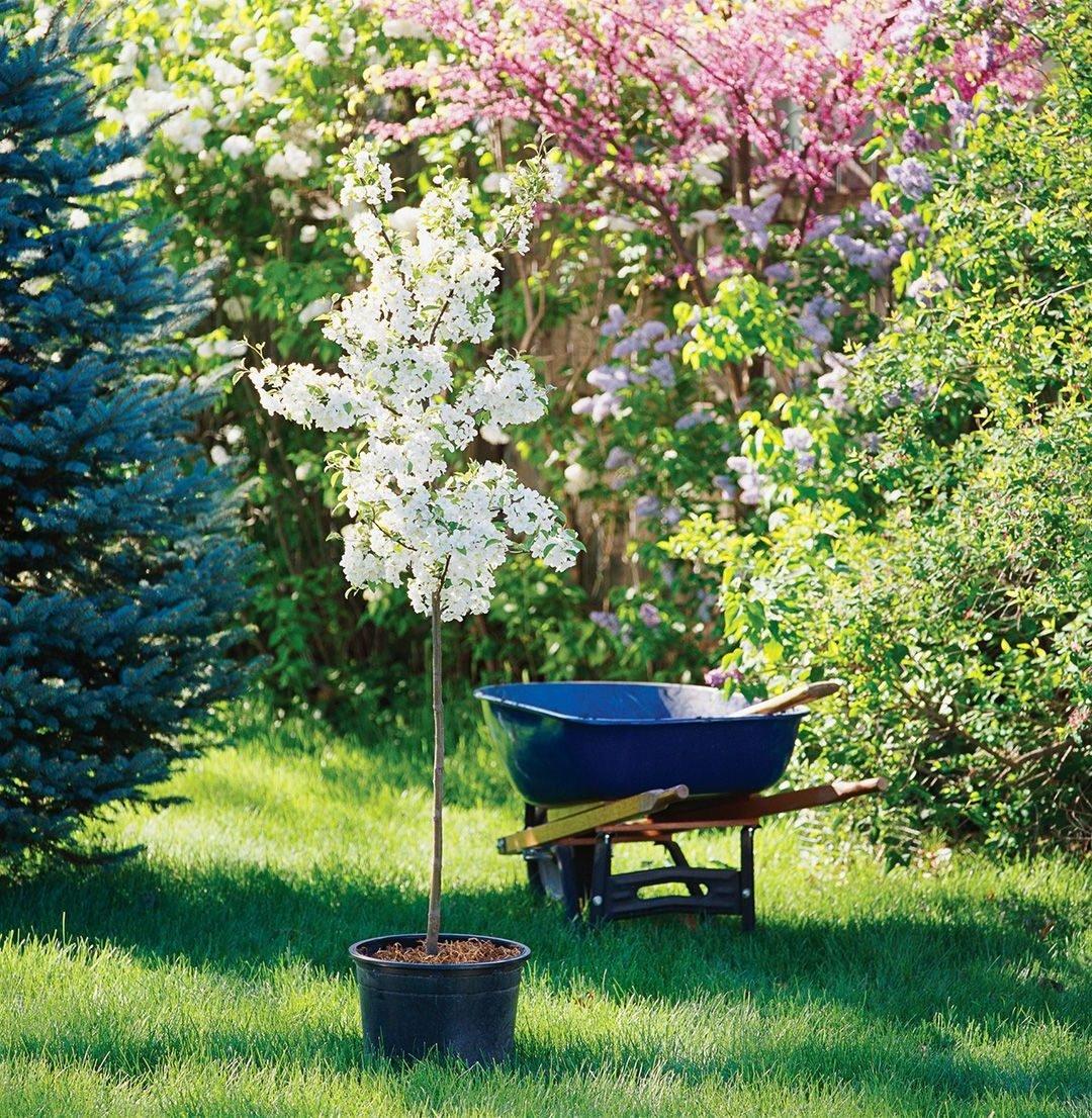 Baum pflanzen - Welcher Baum passt zu welchem Garten?