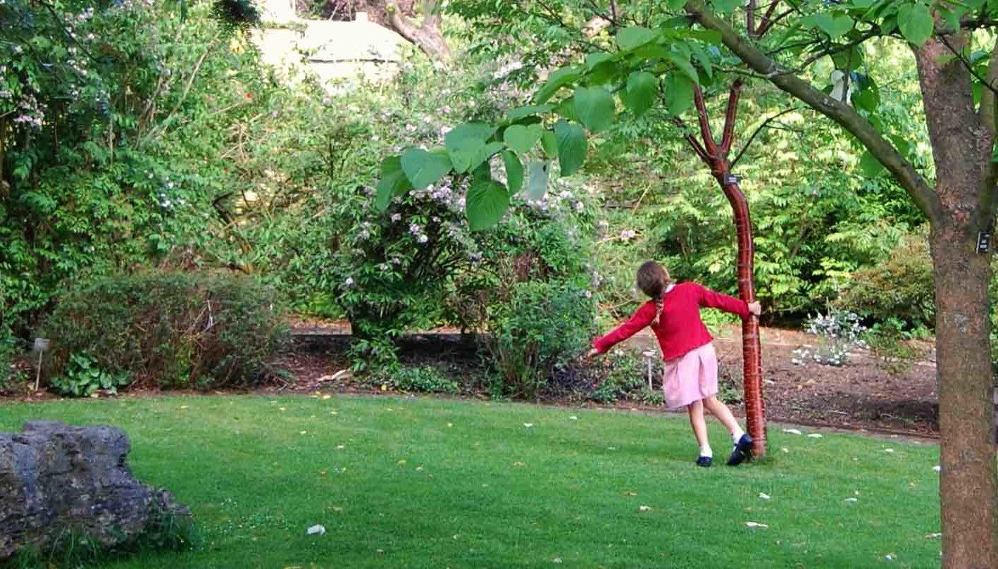 Baum pflanzen im eigenen Garten