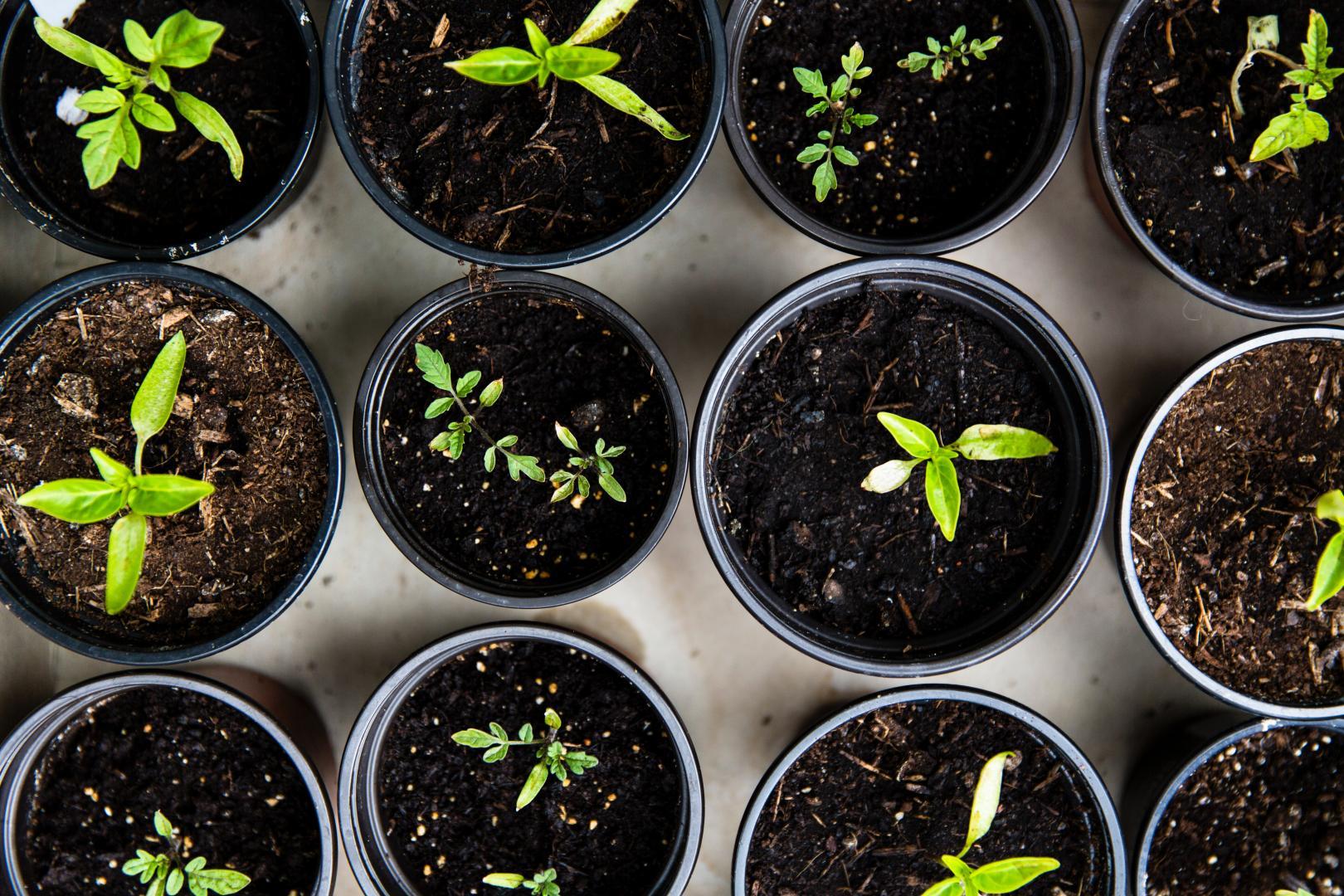 Warum Gärtnern die Entspannung fördert