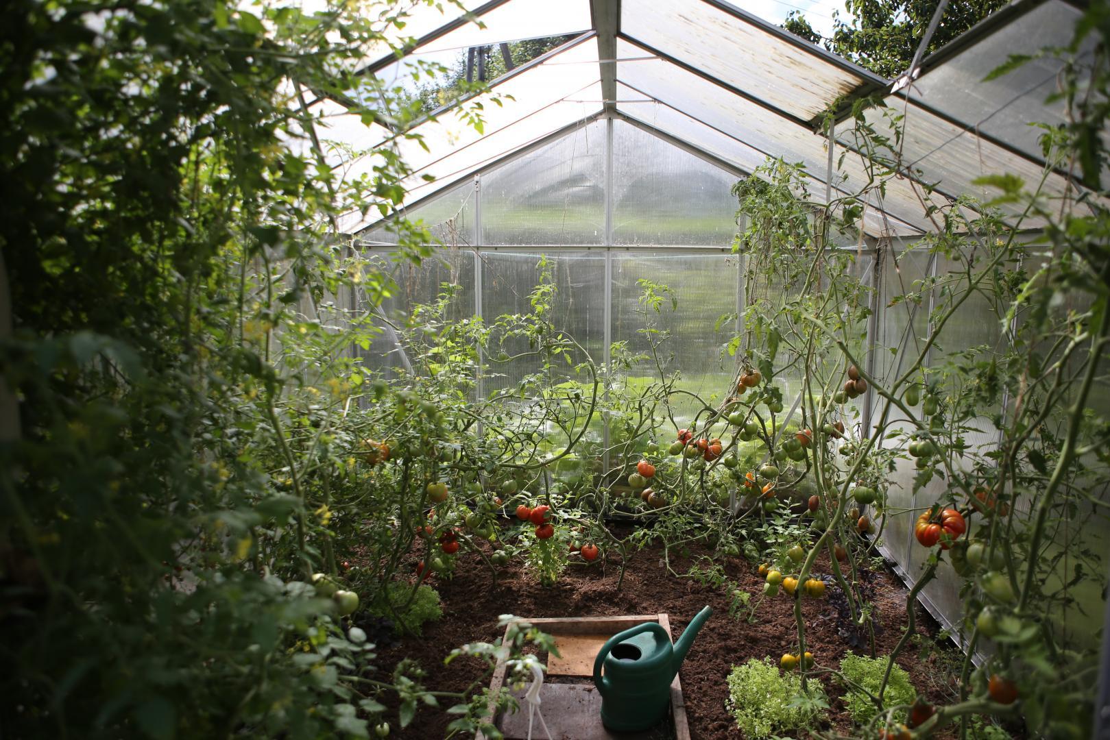 Entspannung finden durch das Gärtnern