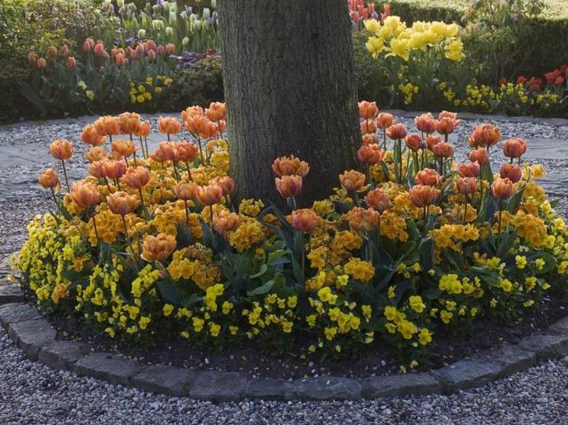 Blumenbeet anlegen um einen hohen Baum