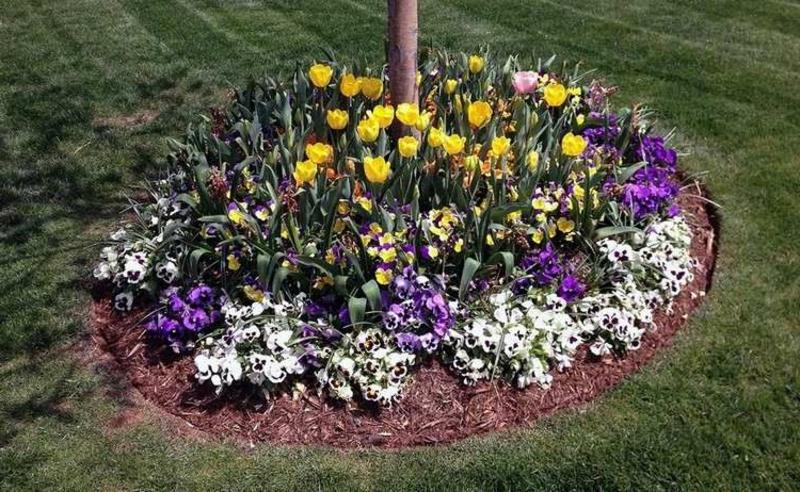 Beet mit Blumen nach der Saison