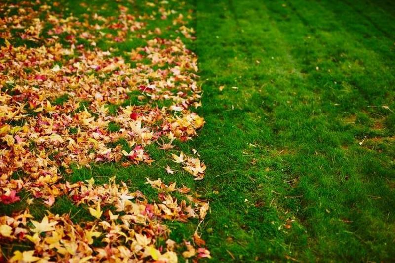 Herbstlaub rechen
