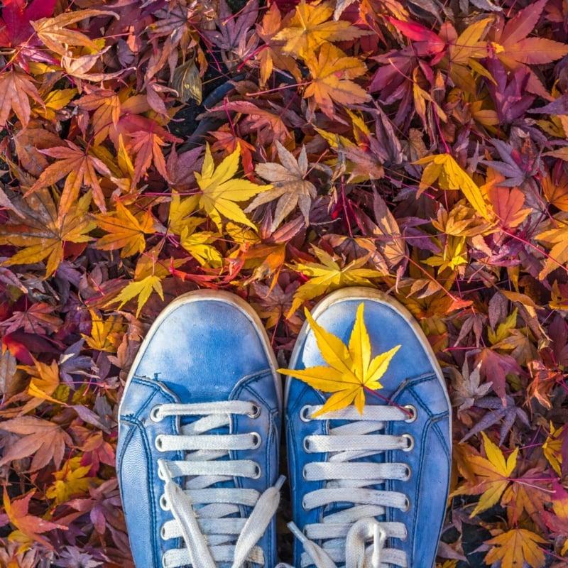 buntes Laub Herbst herrlicher Look