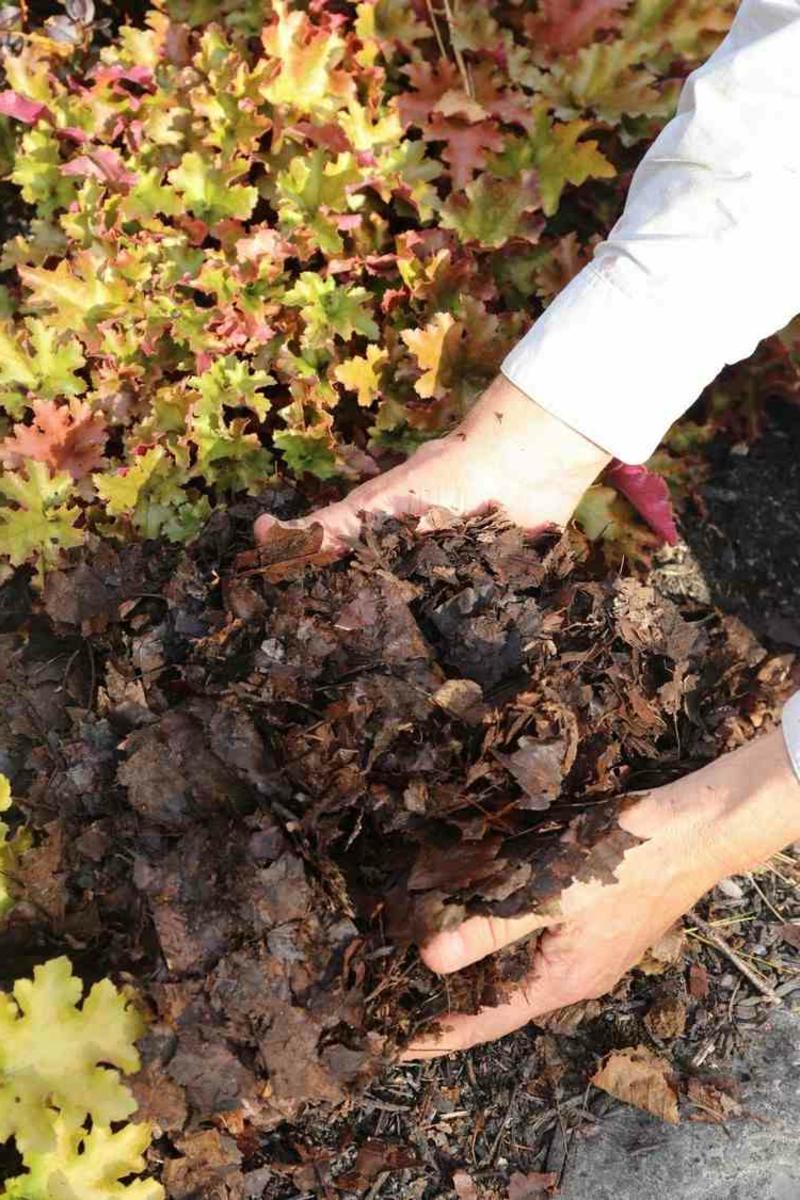 Laub als Kompost verwenden