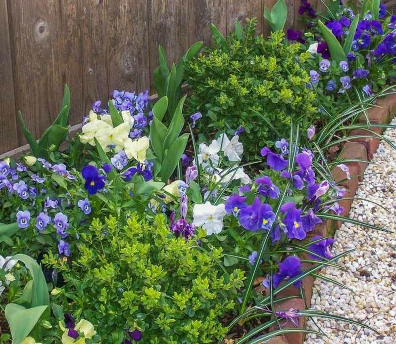 Beet anlegen lang schmal prächtige Blumen