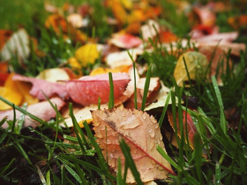 buntes Herbstlaub Rasen