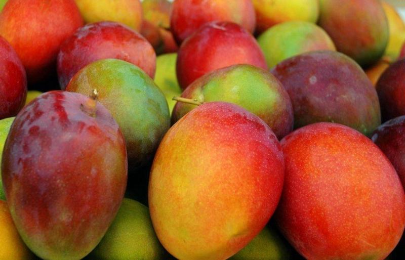 Mangos verschiedene Sorten