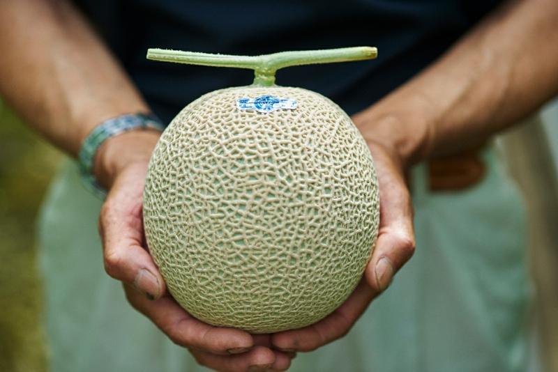 die perfekte Melone kaufen