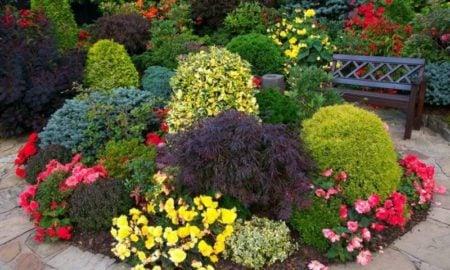 Blumenbeet anlegen mit dekorativen Sträuchern