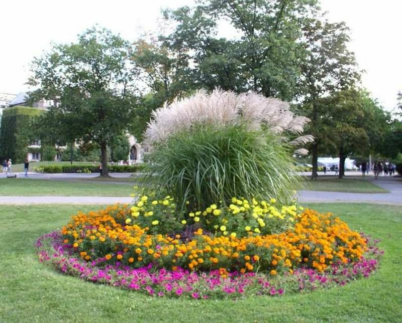 Blumenbeet anlegen rund Palme in der Mitte
