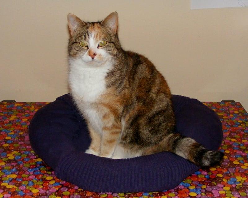Katzenbett selber machen