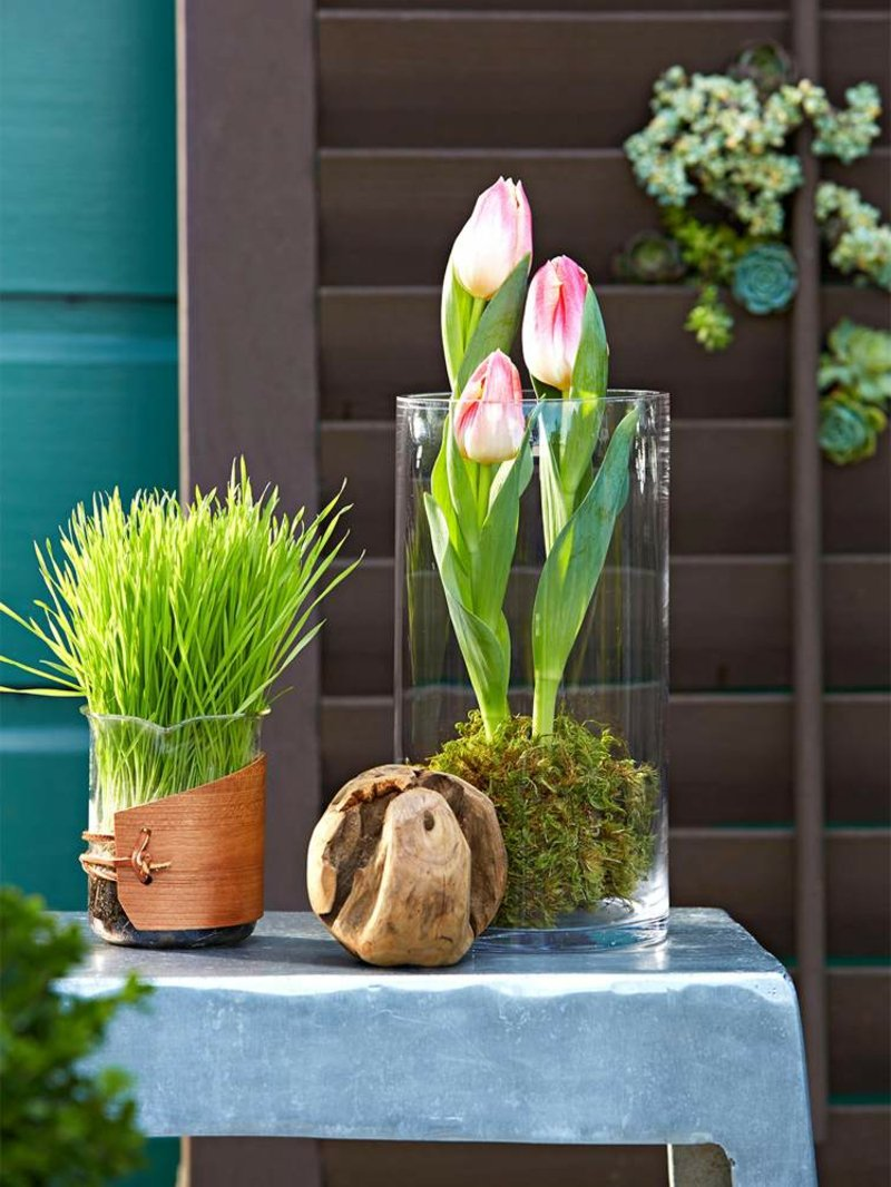 Tulpen pflanzen Mooskugel