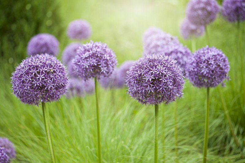 Gartenpflanzen pflegeleicht