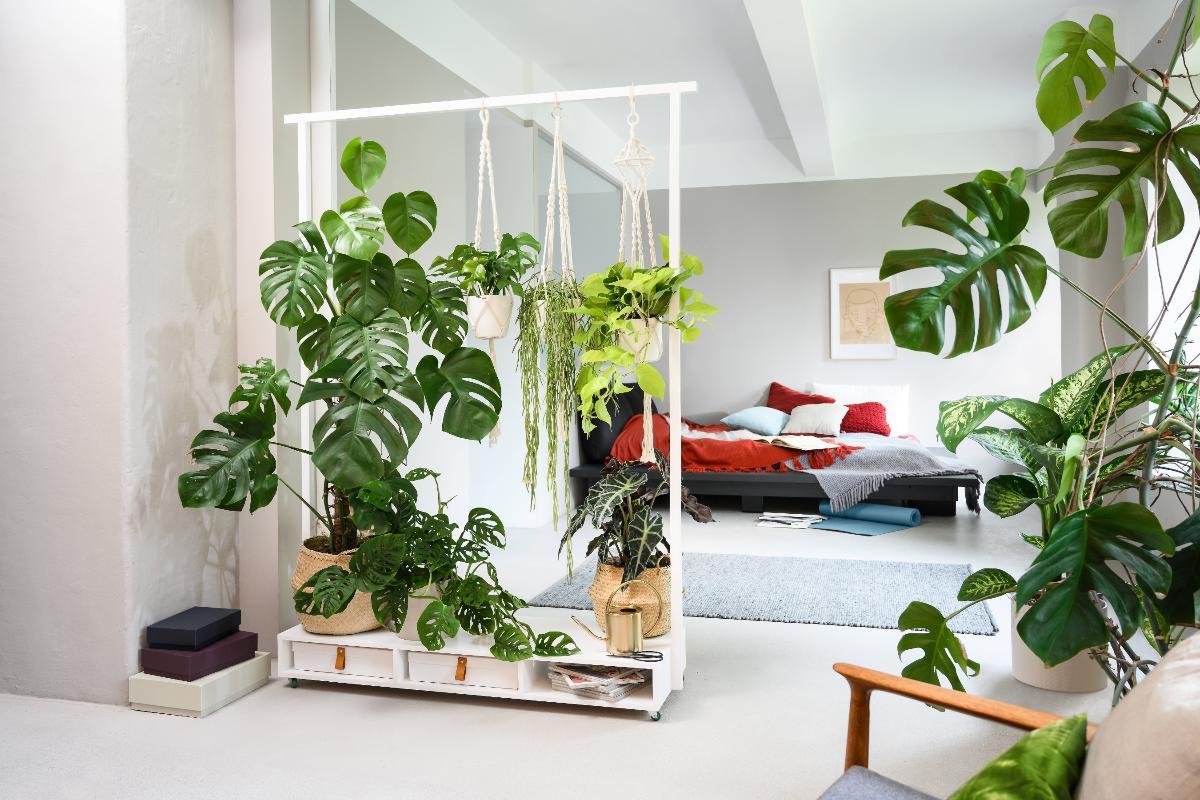 Raumteiler Dekowand Kletterpflanze