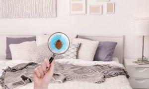 Schädlinge bekämpfen - so beugen Sie die Ungeziefer in der Wohnung vor!